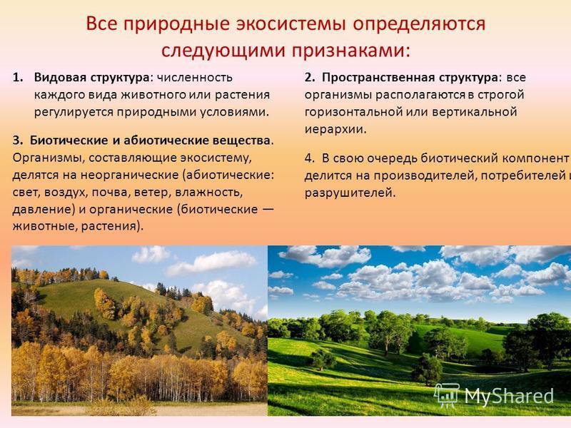 Краткое представление о биоценозе
