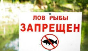 Firstfisher.ru – интернет-журнал о рыбалке и рыболовах.  что нужно знать о нересте у рыб?