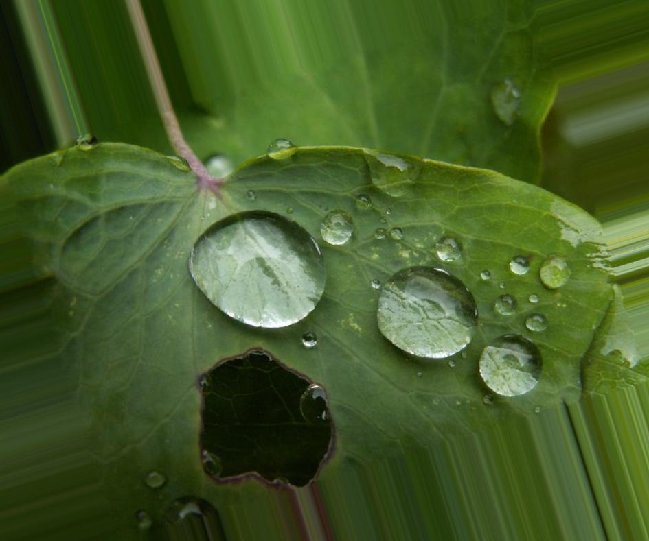Кислотный дождь: причины образования, опасность и последствия