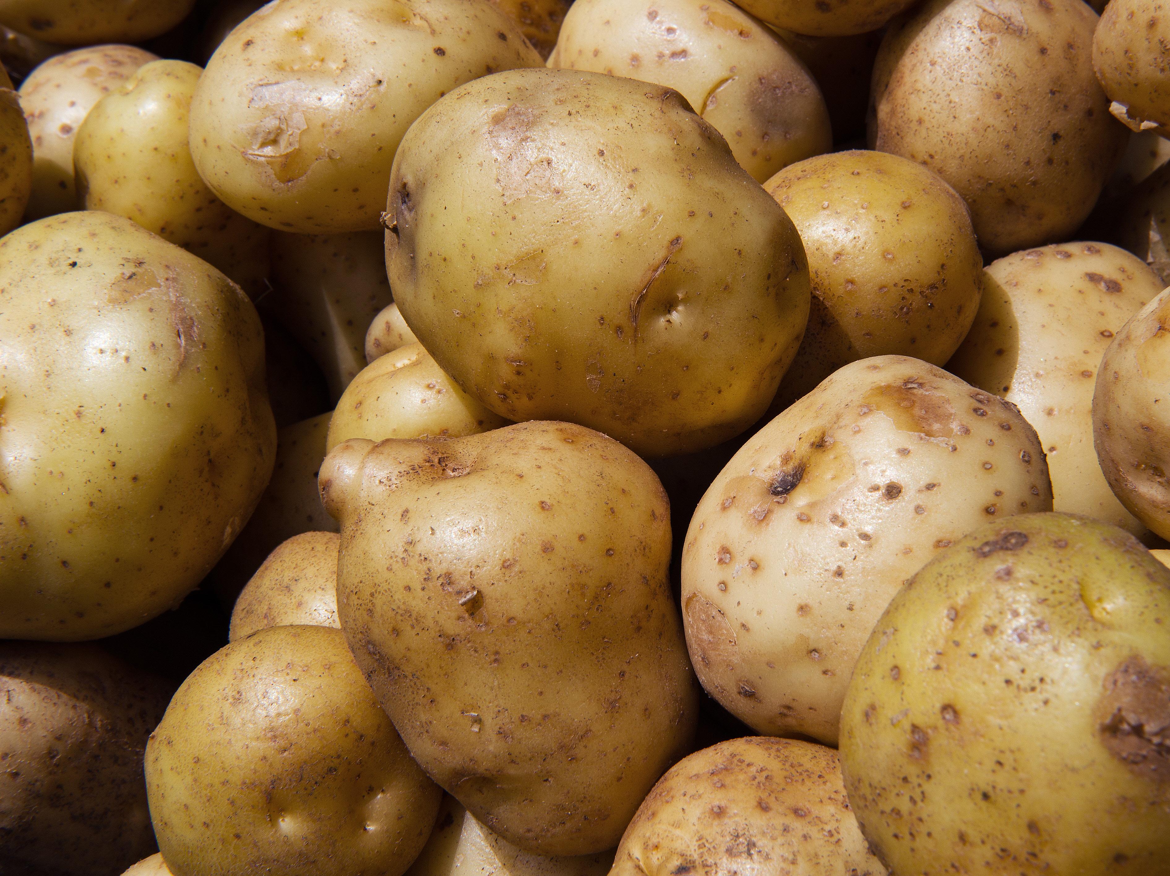 Что такое картошка (паслен клубненосный): к какому семейству относится, характеристика и систематическая группа, описание внешнего вида, определение