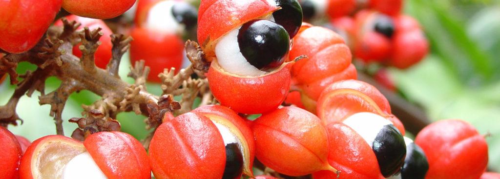 Порошок из семян гуараны