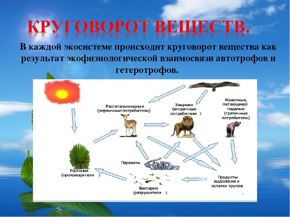 Особенности кругооборота воды и некоторых веществ в биосфере