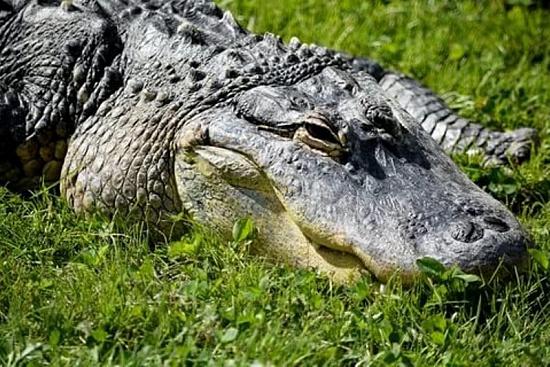 Наркотик крокодил - последствия длительного приема