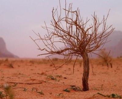 Растение пустыни саксаул. саксаул: цветущее дерево пустыни : labuda.blog растение пустыни саксаул. саксаул: цветущее дерево пустыни — «лабуда» информационно-развлекательный интернет журнал