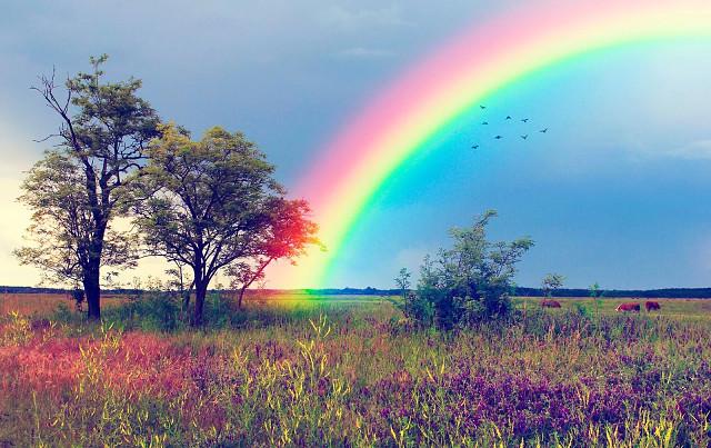 Почему появляется радуга и где ее начало | давайте мечтать вместе!