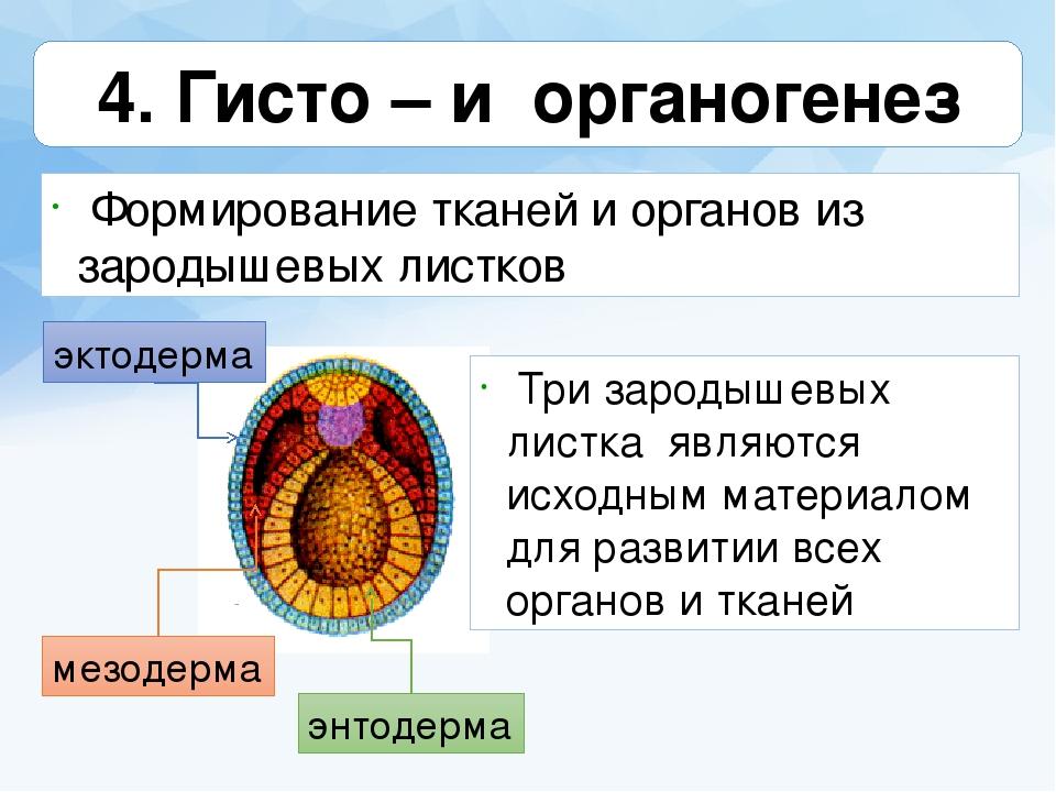 4.оплодотворение. дробление. типы дробления. строение и типы бластул.