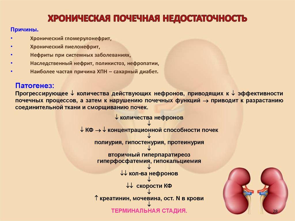 Хроническая почечная недостаточность: симптомы, классификация, осложнения, лечение, профилактика