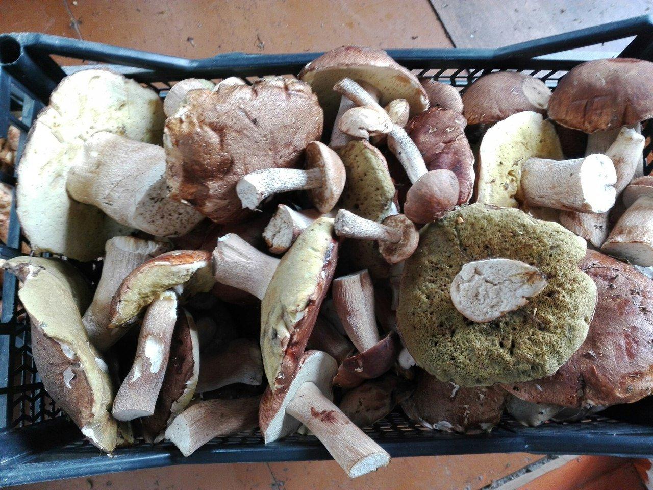 Пашина говяжья. что это такое, рецепты в духовке, аэрогриле, мультиварке, как приготовить с овощами, картошкой, шампиньонами. фото пошагово