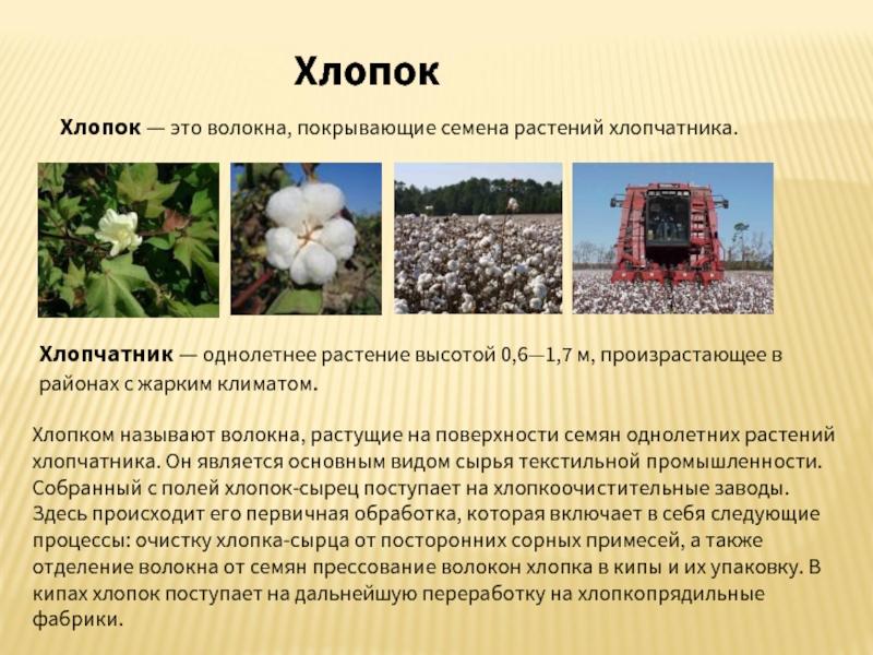 Что такое органический хлопок? особенности производства и ухода за тканью