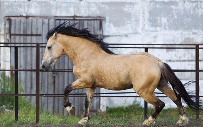 Масти лошадей – особенности разных мастей и породы, которые к ним относятся