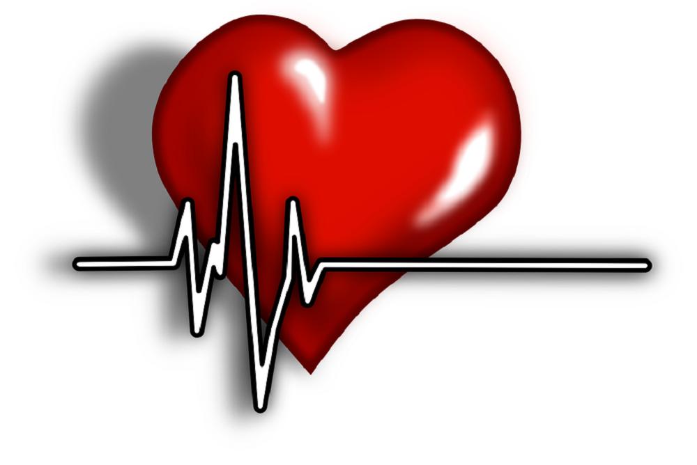 Сердце человека: анатомия и физиология главного органа
