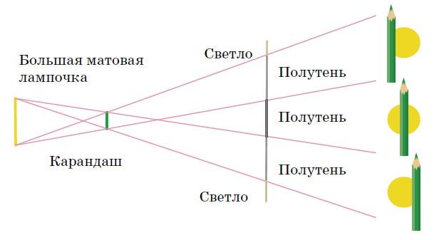 11 красивых цветов для тени и полутени | дизайн участка (огород.ru)
