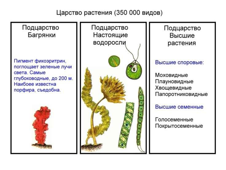Высшие растения: признаки, происхождение и жизненный цикл