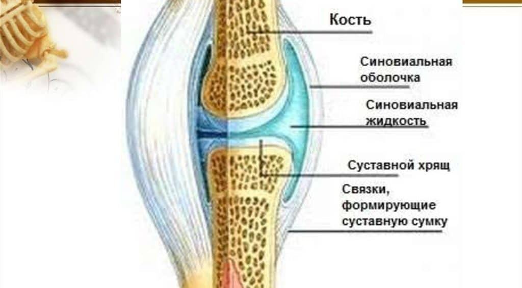Восстановить синовиальную жидкость: медицина и народные средства | spacream.ru