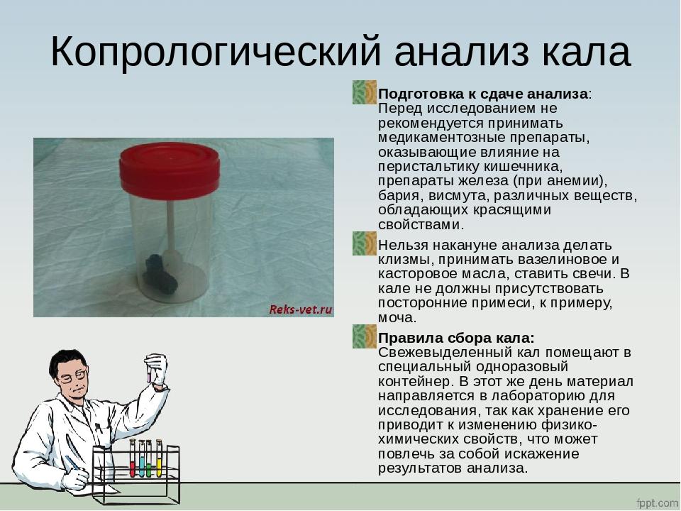 Копрограмма — как собрать кал и что означают показатели