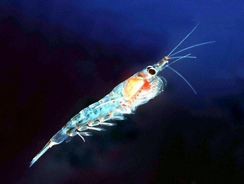 Что такое планктон?