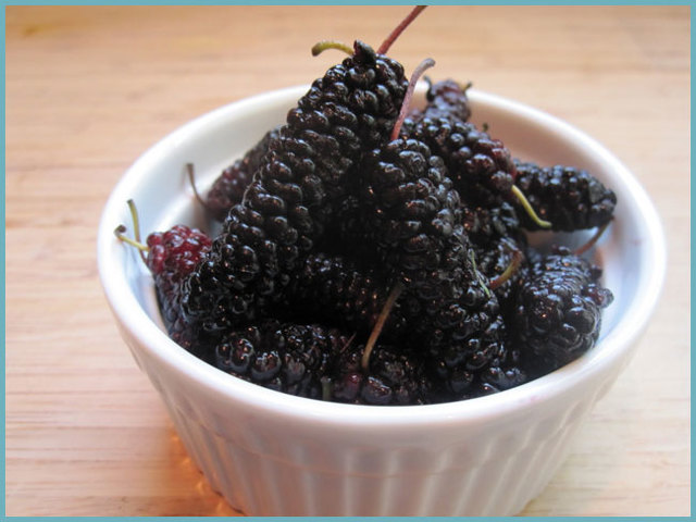 Шелковица (тутовник): полезные свойства и вред, рецепты