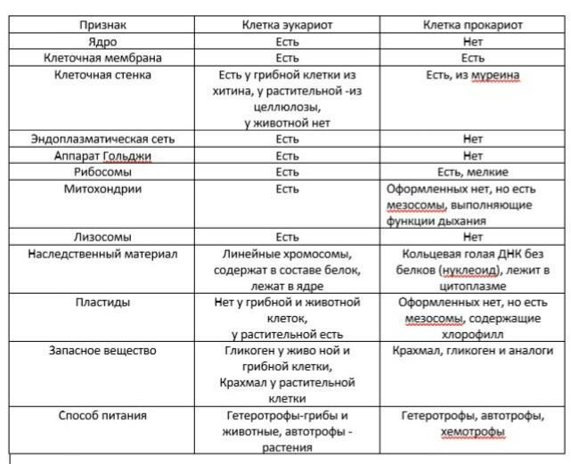 Прокариотические и эукариотические клетки: строение, отличия