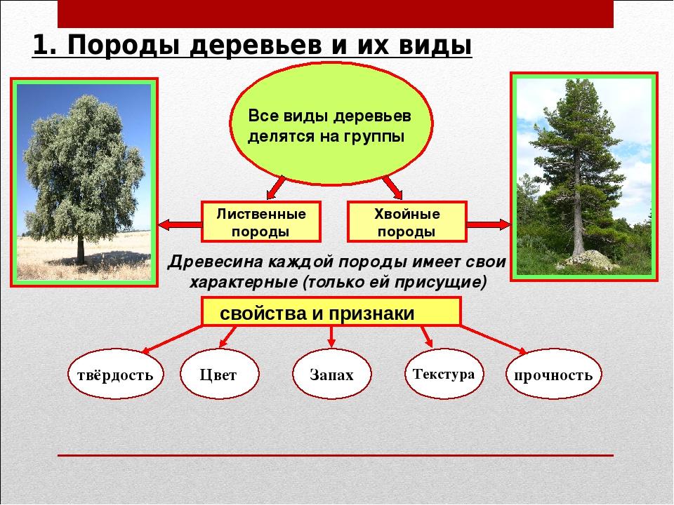 Плюсы и минусы древесины, отличие и сравнение