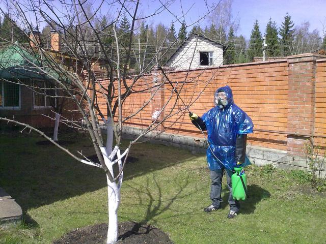 Железный купорос: свойства, выбор, применение для опрыскивание растений и в других случаях