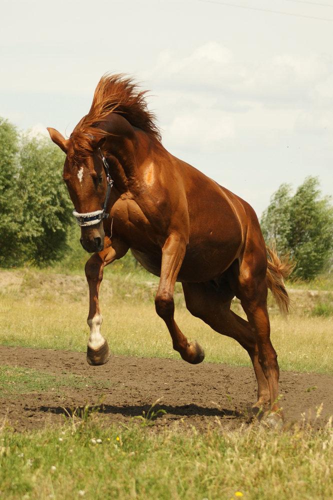 Как ходит и бьёт конь в шахматах