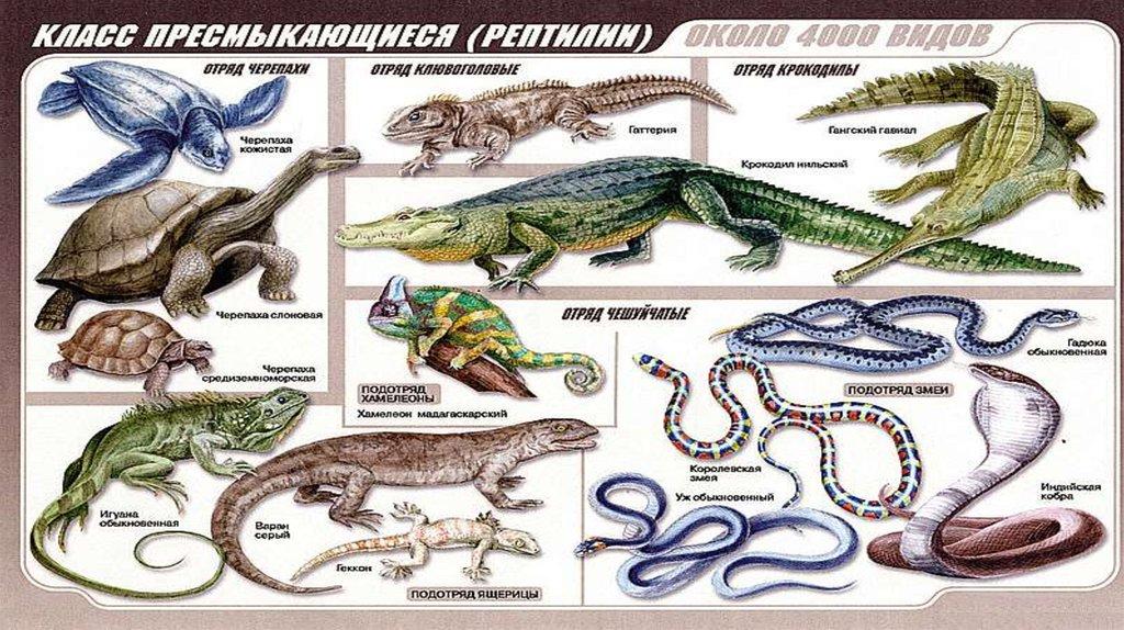 Список пресмыкающихся животных и особенности рептилий