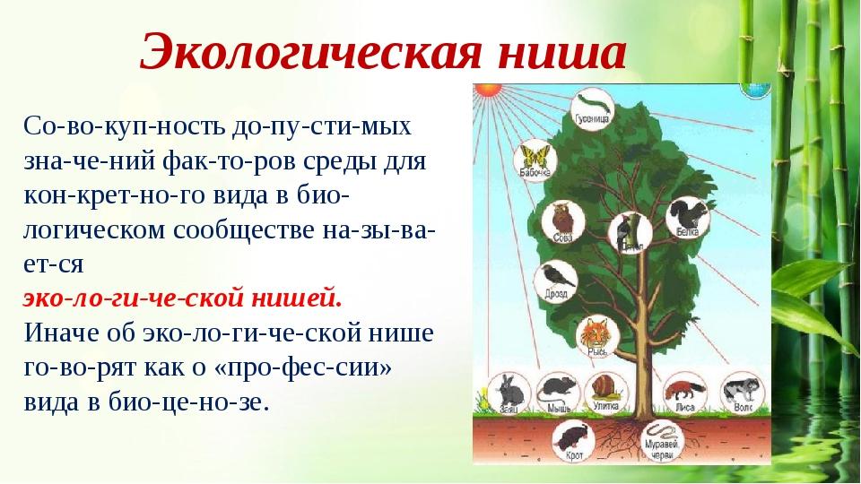 7.4. экологическая ниша. общая экология