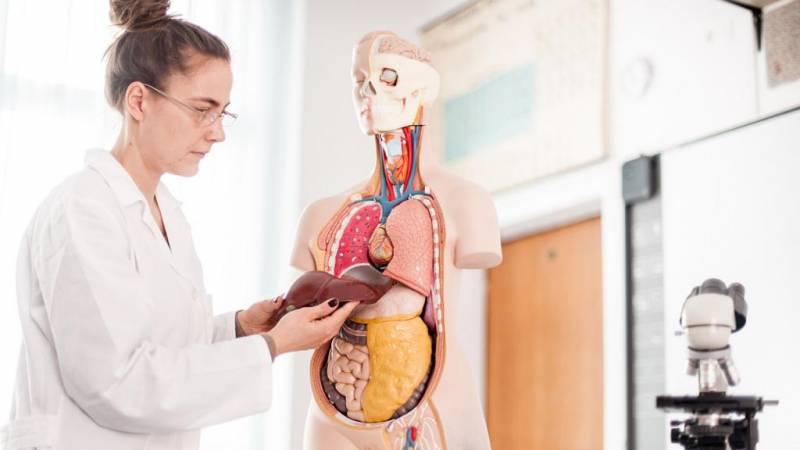 Новый хантавирус: характерные симптомы заболевания