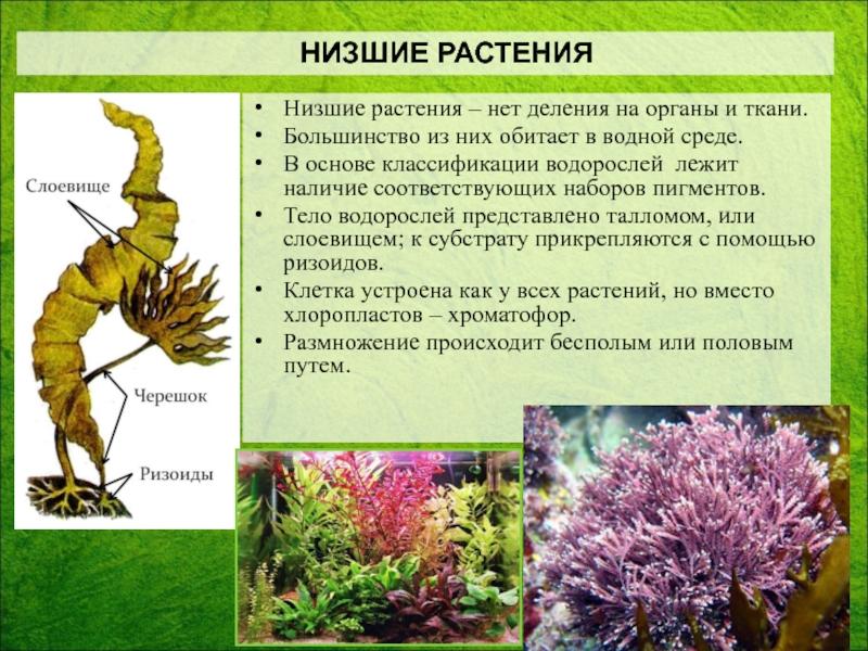 Какие растения называют споровыми: их характерные признаки