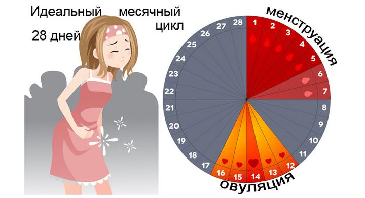 Месячные (менструация): начало, цикл, признаки и гигиена при месячных