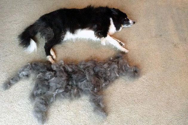 Фурминатор для собак – что это такое, особенности и правила выбора щетки для шерсти