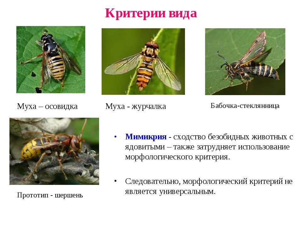 Критерии вида. понятия, определение, виды. - сайт по биологии