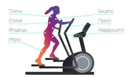 Есть ли отличия в тренировках на эллипсоиде у мужчин и женщин