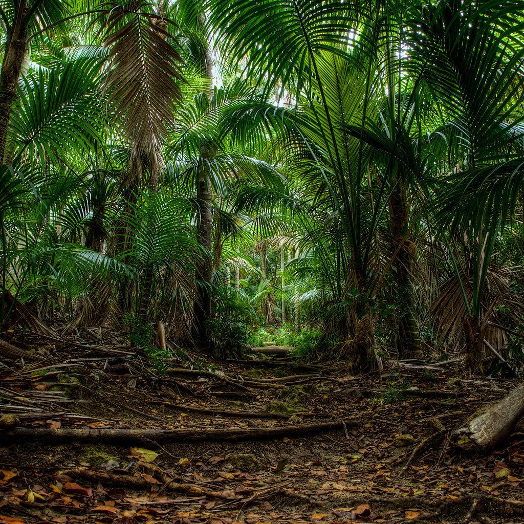 Где находятся джунгли? амазонские и другие леса