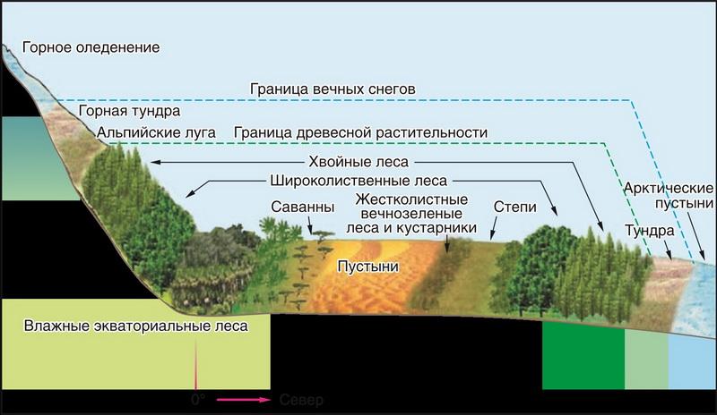 Что такое широтная зональность, и как она влияет на природу земли | новости для умных - news4smart.ru