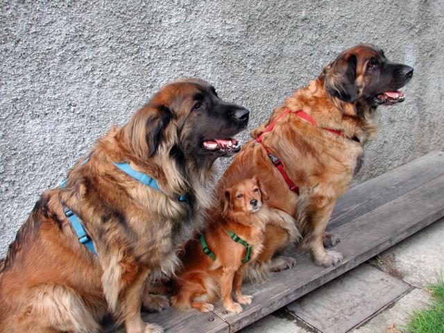 Как выбрать шлейку для собак: советы, разновидности, правила