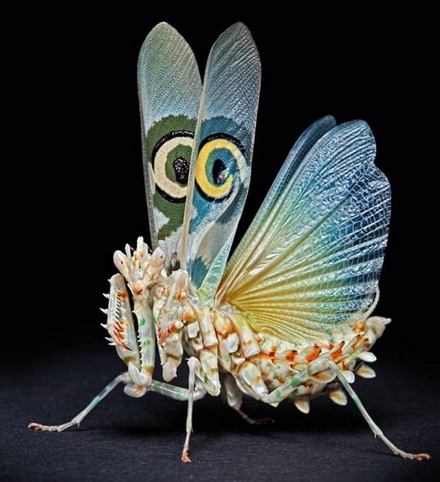 Энтомология — википедия. что такое энтомология