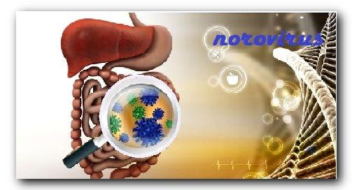 Норовирусная инфекция – что это такое, как лечить? норовирус – симптомы, пути передачи норовируса