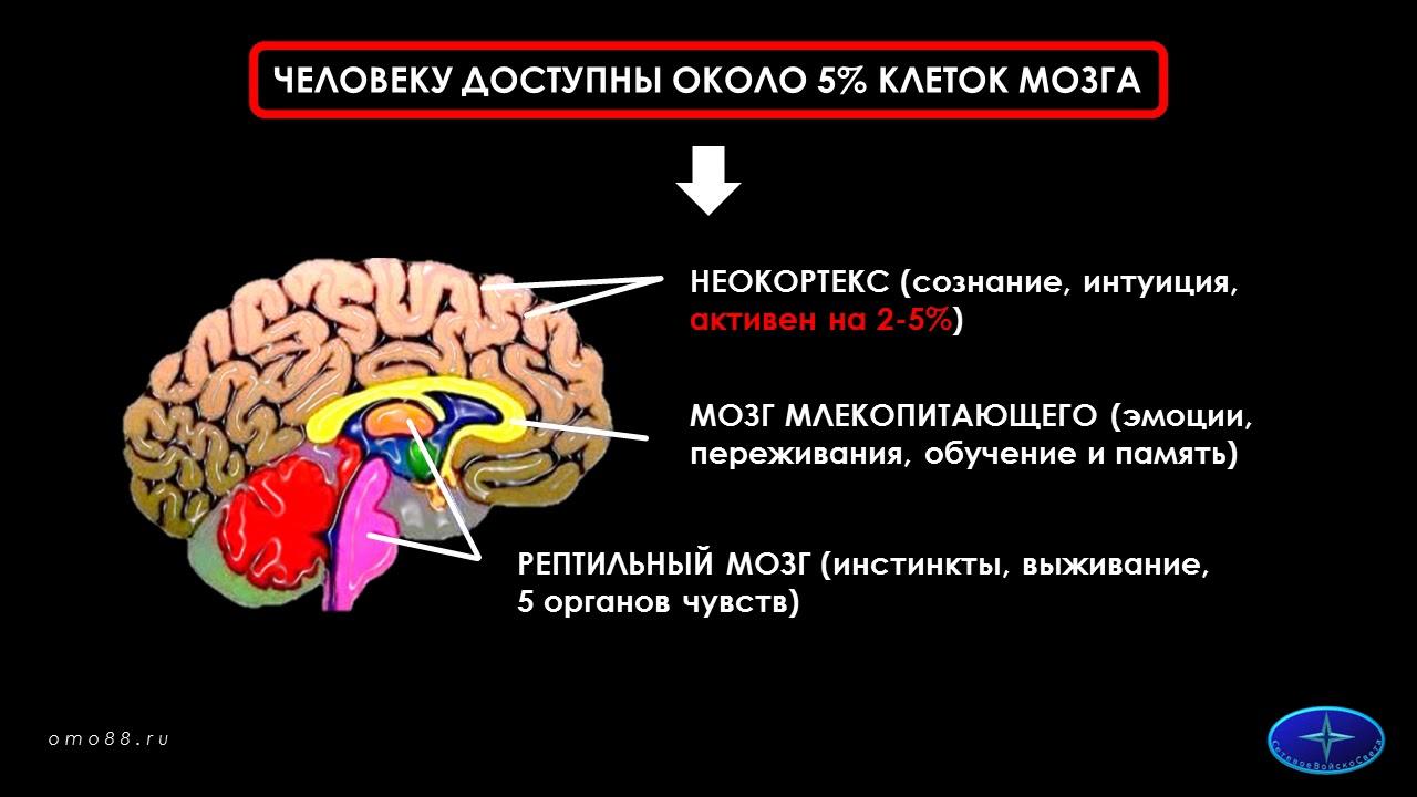 Неокортекс — что это такое?