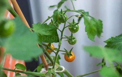 Мочевина (карбамид) — удобрение и защита растений