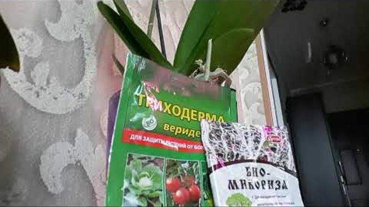 Что такое микориза в биологии? :: syl.ru