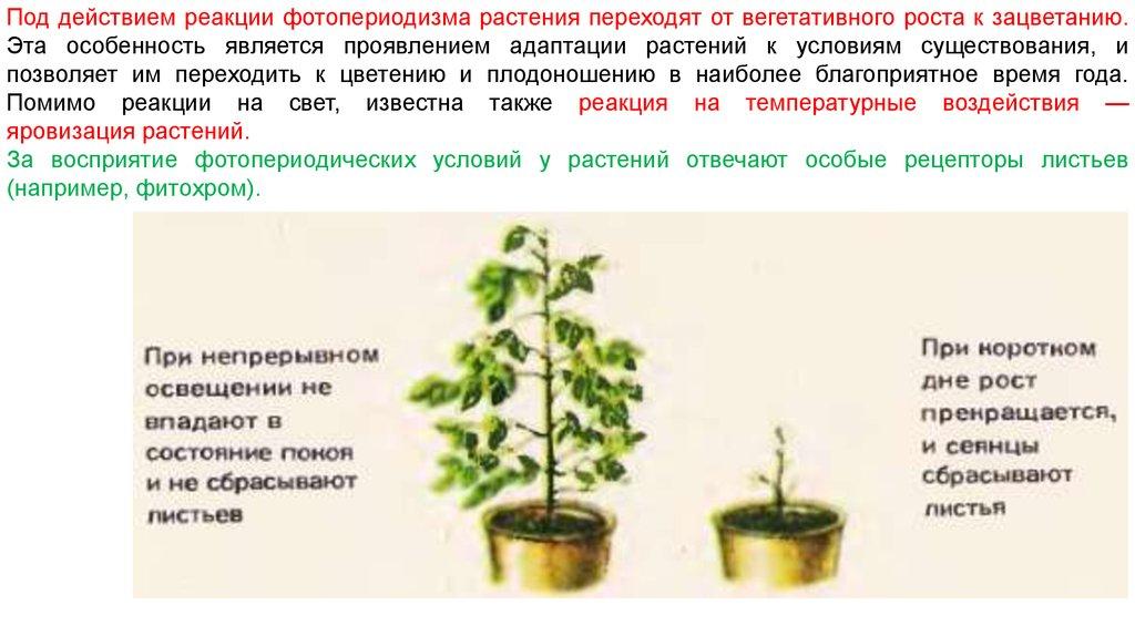 Фотопериодизм у растений и животных. фотопериодизм это реакция
