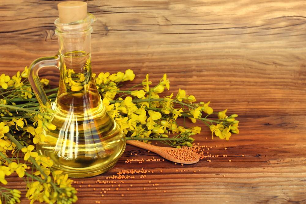 Рапсовое масло - полезные свойства и противопоказания. из чего производят рапсовое масло и как используют