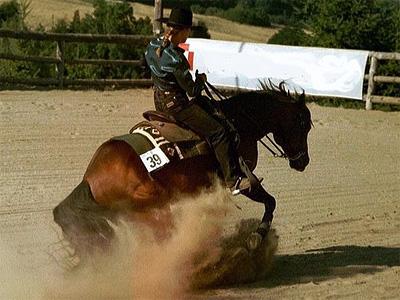 Выездка: что это такое, паралимпийские соревнования по конному спорту, занятия с тренером, элементы и основы верховой езды, кюр
