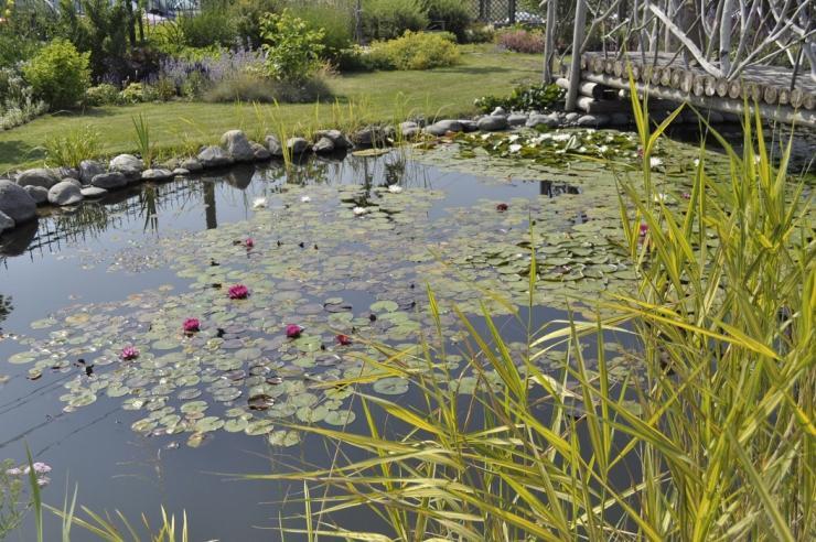 Виды прудов — циклопедия