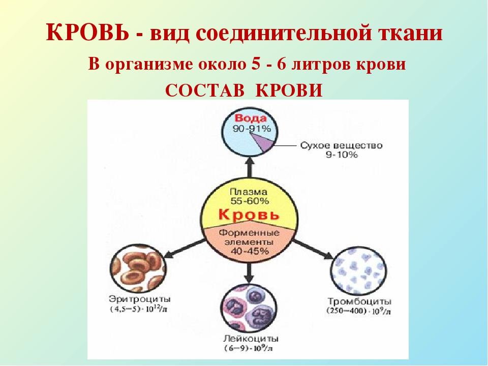 Плазма крови человека состав функции и возможные заболевания
