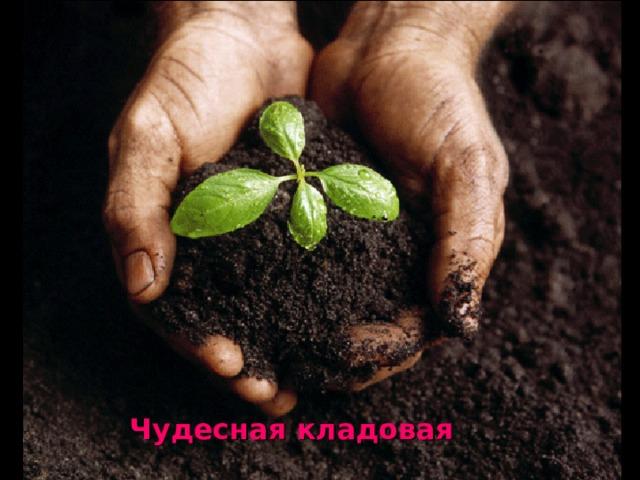 Что такое почва — состав, типы и их характеристика