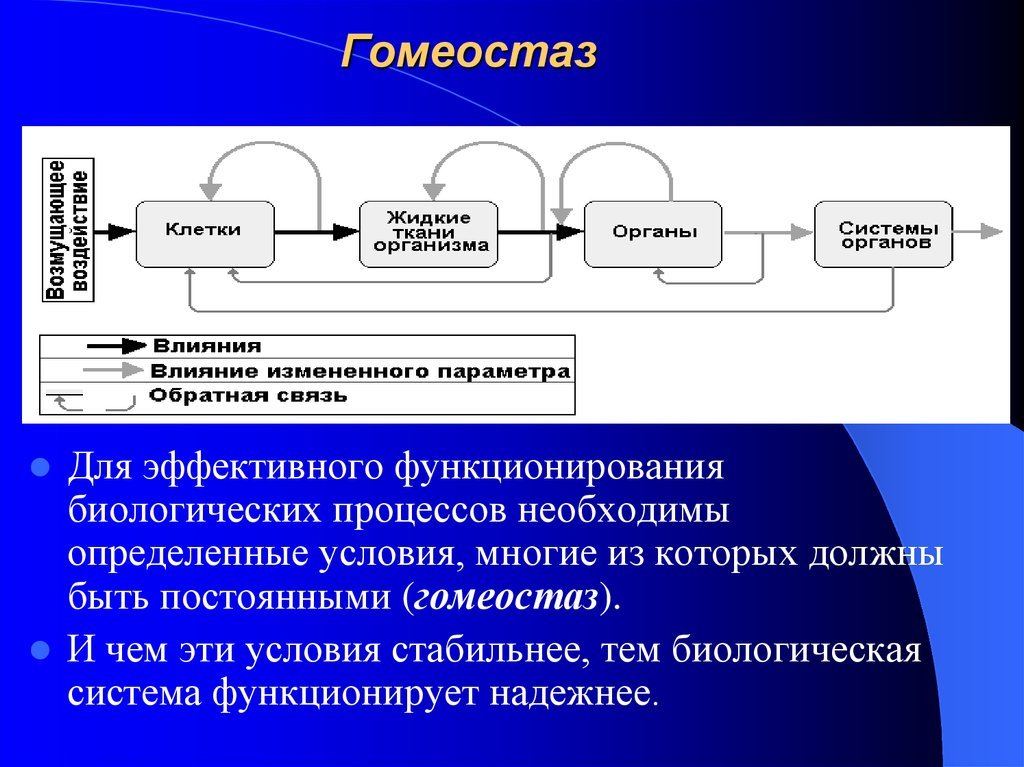 Гомеостаз — википедия с видео // wiki 2