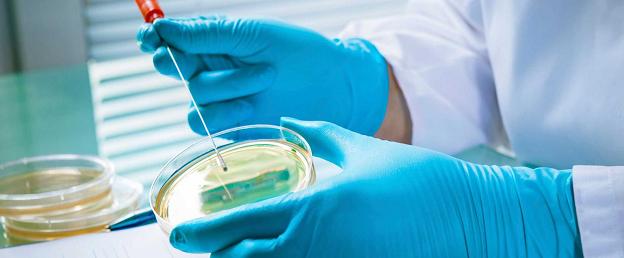 Бактерии в микробиологии: стоение, классификация