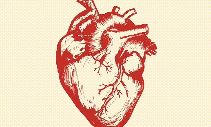 Строение сердца человека: схема, анатомия, функции и работа, особенности клапанов, предсердий, желудочков, круги кровообращения, внутреннее строение у ребенка
